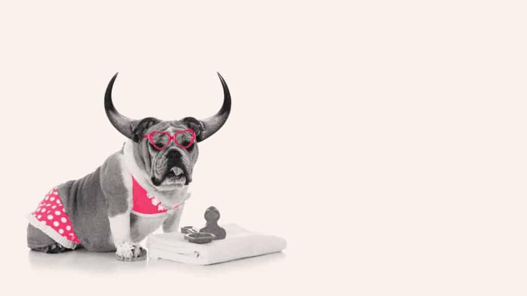 Vigor acquired by Pavone - bulldogs meet the bulls